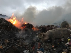 pig and fire